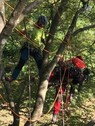 Gestellte Rettung im Baum.