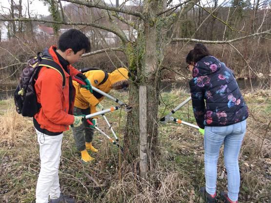 Die Arbeiten im Pro Natura-Schutzgebiet Limmatspitz fanden am Montag Nachmittag und Mittwoch Vormittag statt.