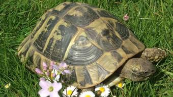 Schildkröten mögen Blumen und andere Schildis.