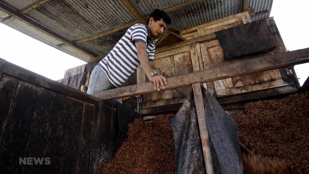 Für faire Osterschoggi: Peruanische Bauern kommen nach Bern