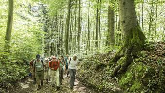 Wanderung durch die Wälder und sanften Hügel