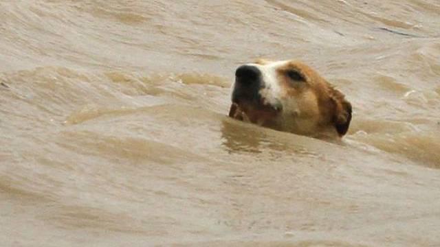Ein Hund in einem Fluss (Archiv)