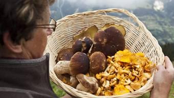Wer Pilze sammelt, sollte diese vor dem Verzehr erst zur Kontrolle bringen. (Symbolbild)