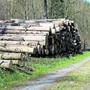 Befallenes Käferholz wird aus dem Wald abgeführt und vom Forstbetrieb Region Muri auf einen Zwischenlagerplatz in Aristau gebracht.