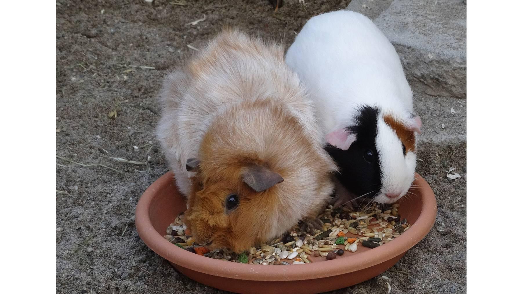 Minty und Micky