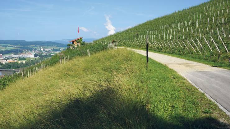 Blick vom Weinwanderweg auf die Altstadt von Klingnau und über den Klingnauerstrausee.