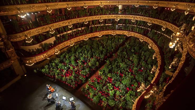 dpatopbilder - Musiker proben im Gran Teatre del Liceu, wobei alle 2.292 Sitzplätze mit Pflanzen besetzt sind. Foto: Emilio Morenatti/AP/dpa
