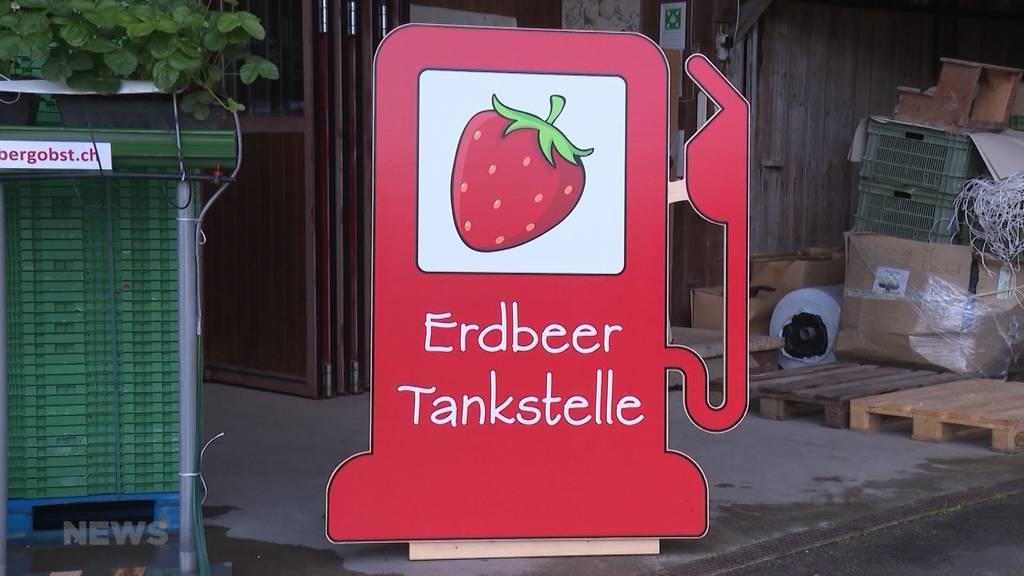 Erdbeeren statt Benzin: Erste Erdbeer-Tankstelle der Schweiz