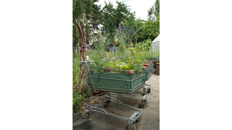 ...stösst zunehmend auf den städtischen Wunsch nach Nähe zum Anbau («Keinkaufswagen» von Urban Agriculture). Ken