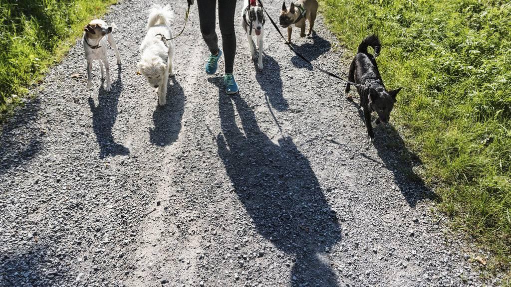 Der Spaziergänger war mit fünf Hunden unterwegs (Symbolbild).
