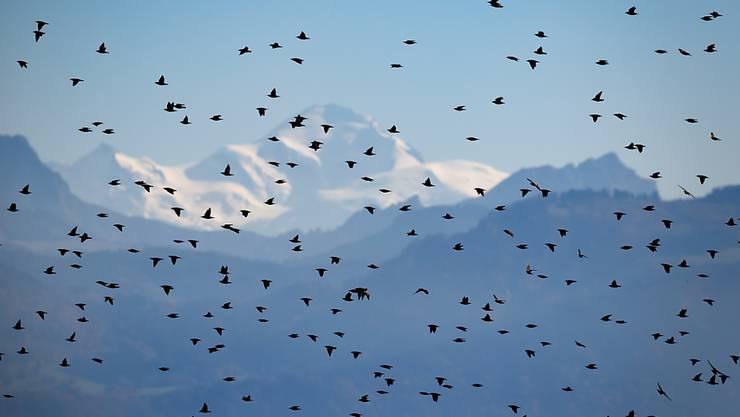 Wegen heftiger Winde sind in Griechenland tausende Zugvögel umgekommen. (Symbolbild)