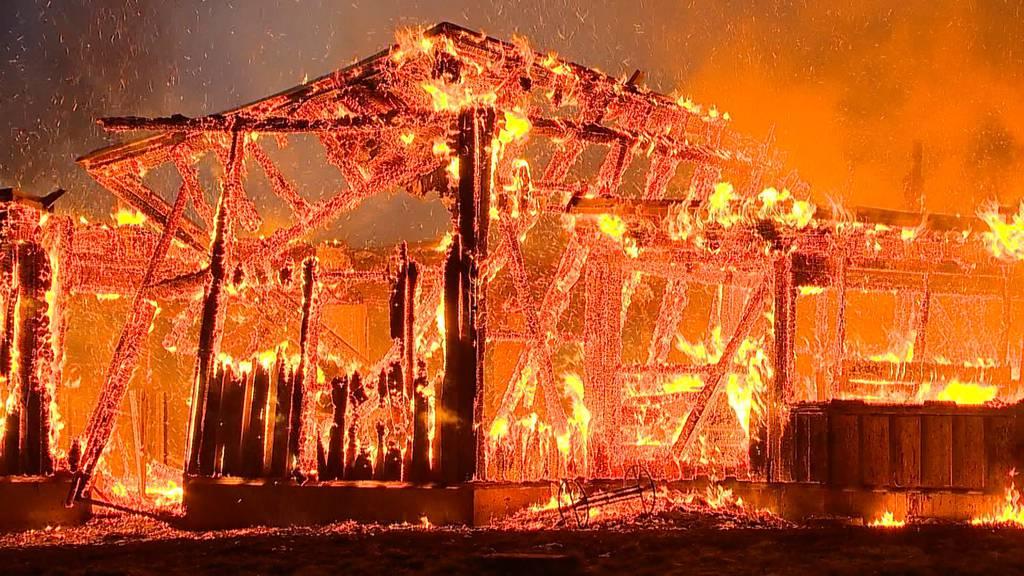 Grossbrand in Herdern TG: Rund 160 Tiere in Flammen verendet