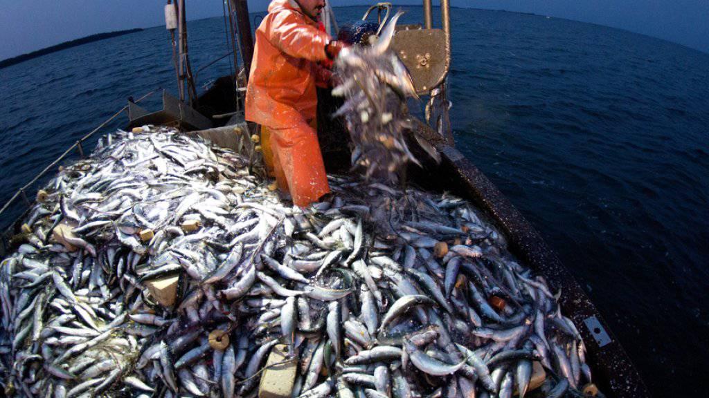 Die befischte Fläche ist vier Mal grösser als die landwirtschaftlich genutzte Erdoberfläche.  (Symbolbild)