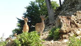 Sommer im Tierpark Mühletäli