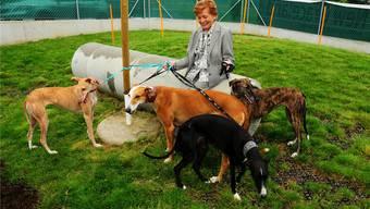 Lys Assia mit Galgos im neuen Gehege. 2015 fanden 236 Tiere, die in Waltenschwil aufgepäppelt wurden, einen neuen Platz.