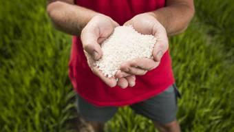 Reis: Das Schweizer Korn der Zukunft?