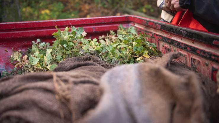 Freiwillige pflanzen Bäume nach dem Sturm Burglind in Riedholz