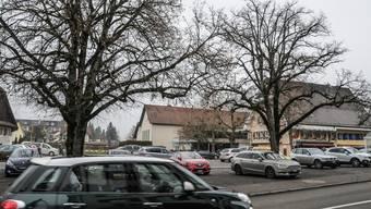 Unter den mächtigen Linden sollen keine Autos mehr parkieren dürfen.