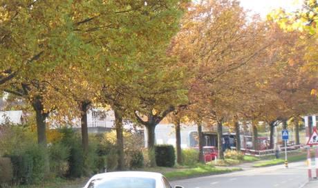 an der schlachthausstrasse werden b ume geschlachtet grenchen solothurn solothurn az. Black Bedroom Furniture Sets. Home Design Ideas