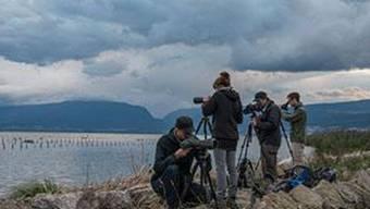 Am Bird Race ging es darum, innert 24 Stunden möglichst viele Vogelarten zu sichten. Das gesammelte Geld kommt dem Steinkauz zugute.