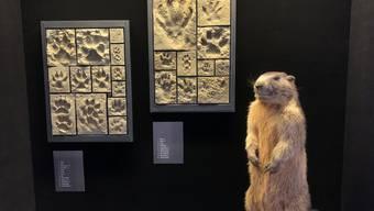 Blick auf die neue Spuren-Ausstellung.