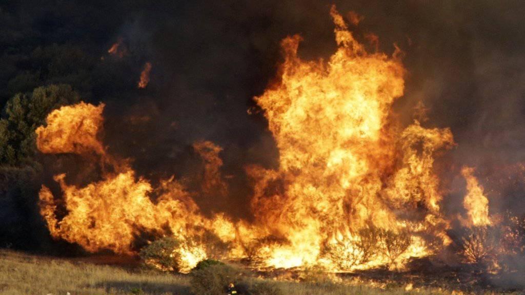 Die Feuerwehr versucht einen Brand im Ort Kalyvia südöstlich von Athen zu löschen. Die Einsatzkräfte wollen verhindern, dass die Flammen bewohntes Gebiet erreichen.