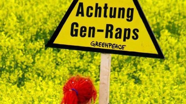 Greenpeace hat in Basel verwilderten Gentech-Raps gefunden (Symbolbild)