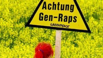 Greenpeace hat in Basel verwilderter Gentech-Raps gefunden (Symbolbild)