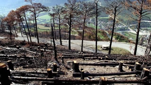 Der Wald oberhalb Leuk nach dem Brand (Aufnahme vom September 2003)