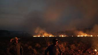 In Brasilien gibt es immer mehr illegale Rodungen von Waldgebieten mit Feuern, damit die Fläche für die Landwirtschaft genutzt werden kann. (Archivbild)