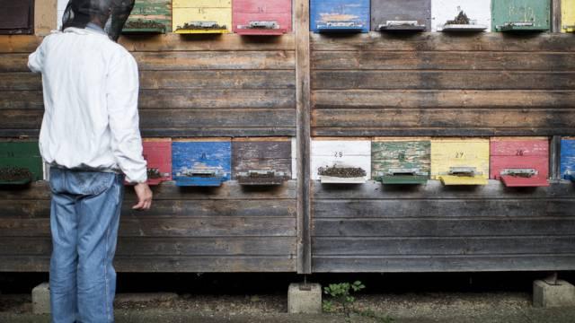 Ein Imker kontrolliert die Bienenbestände