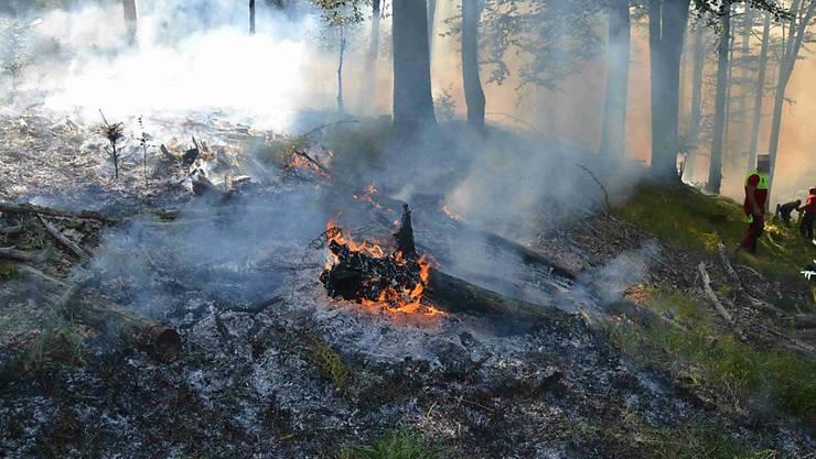 Der Waldbrand in Kleinlützel forderte die Feuerwehren: Das Waldstück liegt in einem schwer zugänglichen Gebiet.
