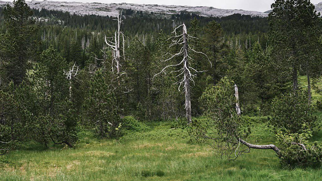 Umweltschützer zeichnen ein düsteres Bild von der Schweizer Moorlandschaft. Sie sehen die Biodiversität gefährdet. (Archivbild)