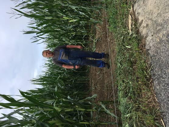 Im Vordergrund der Elektrozaun zum Schutz des Maisfelds