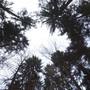 Forstbetrieb Bucheggberg betreibt bisher das einzige CO2-Reduktionsprojekt im Kanton.
