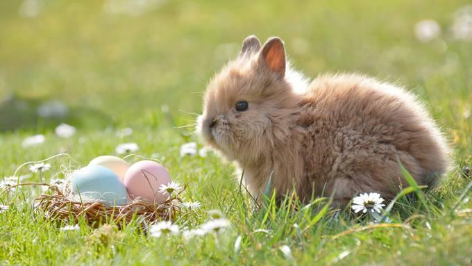 Was feiern wir an Ostern überhaupt?