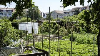 Familiengärten in der Region im Aufwind