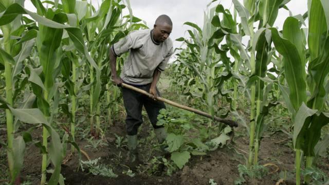 Ein Bauer arbeitet auf einem Maisfeld nahe Arusha, Tansania