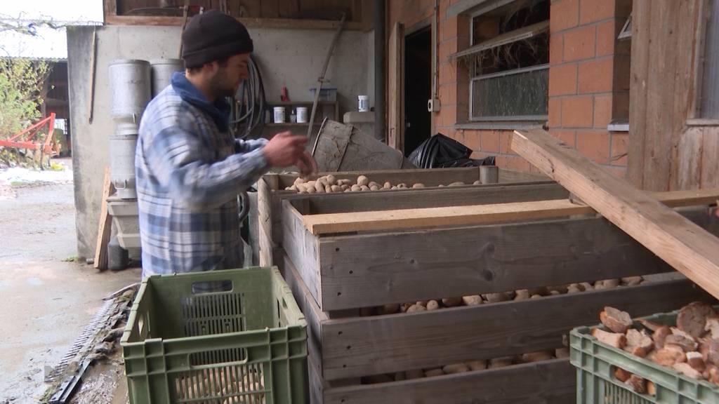 Weil sie nicht der Norm entsprechen: Berner Bauer bleibt auf tonnenweise Kartoffeln sitzen