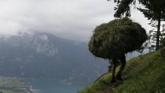 Die Arbeit der Wildheuer ist hart und gefährlich, trägt aber zum Erhalt bedrohter Kulturlandschaften bei und wird deswegen von der Stiftung für Landschaftsschutz ausgezeichnet. (Archivbild)