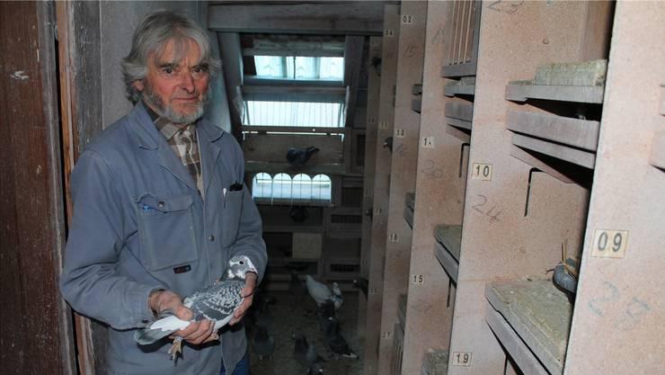 «Das Rennpferd des kleinen Mannes.» Herbert Steinebrunner mit Taube auf dem Dachboden seines Hauses in Oberwil.
