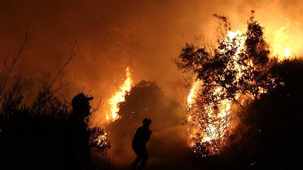 Ein Feuerwehrmann versucht in der Ferienregion nordöstlich von Athen bei Kálamos ein Feuer zu löschen.