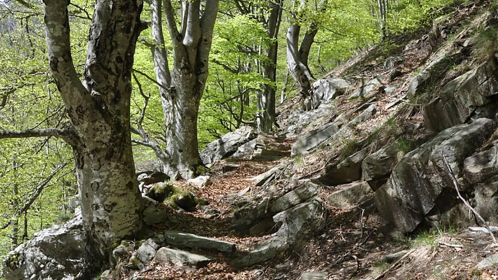 Tessiner Buchenwälder sollen Unesco-Weltnaturerbe werden