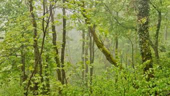 Der Wald profitiert in erster Linie vom Regen: Je vielfältiger das Ökosystem, desto robuster ist es gegen extreme Witterung.