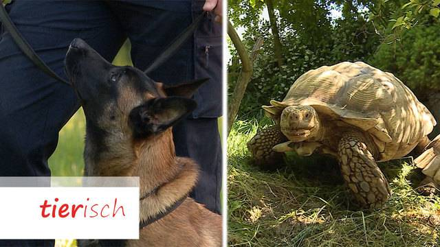 Polizeihunde-Training / Schildkröten-Auffangstation