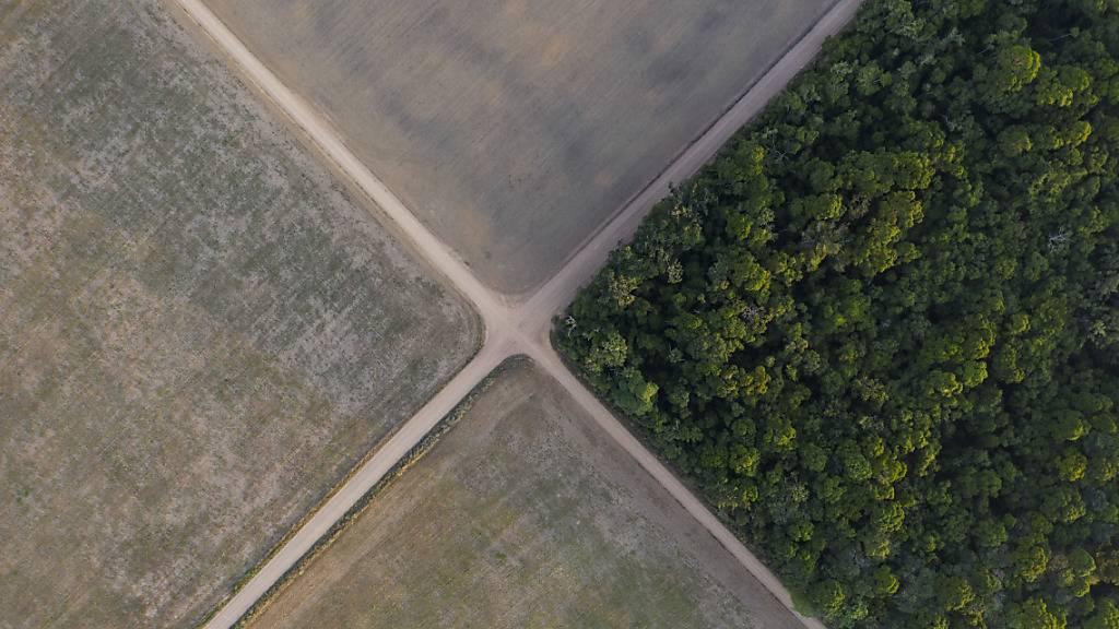 WWF-Studie: Schweizer Importe fördern Regenwald-Abholzung