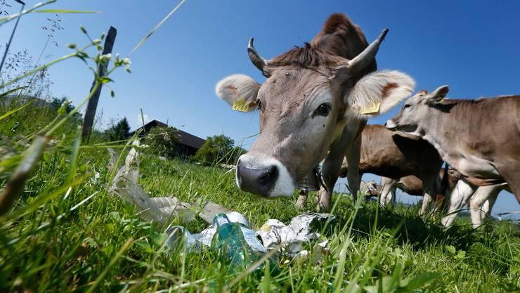 Abfall auf Wiesen stellt für Kühe eine Gefahr dar.