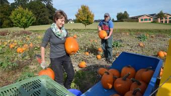 Trudi und Othmar Vollenweider können sich dieses Jahr über eine besonders ertragreiche Ernte freuen.
