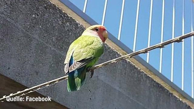 Exotischer Vogel in Solothurn