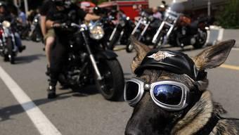 Die Harley-Fans in Lugano